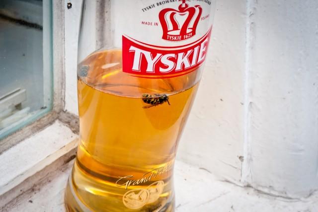 Fliege im Bierglas