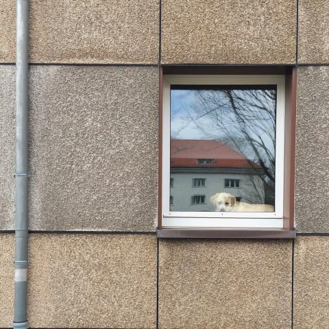 Hund im Fenster